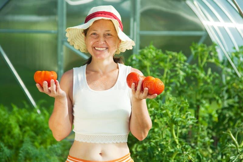 Ντομάτα γυναικών witrh στο θερμοκήπιο στοκ εικόνες με δικαίωμα ελεύθερης χρήσης