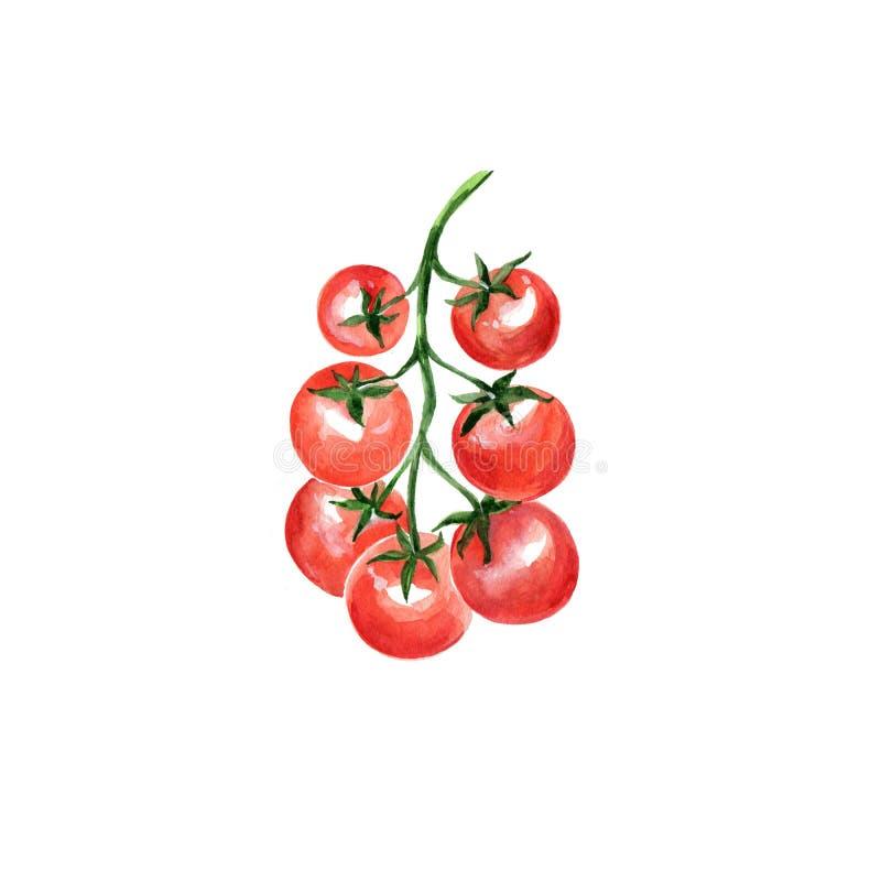 Ντομάτα κερασιών ελεύθερη απεικόνιση δικαιώματος