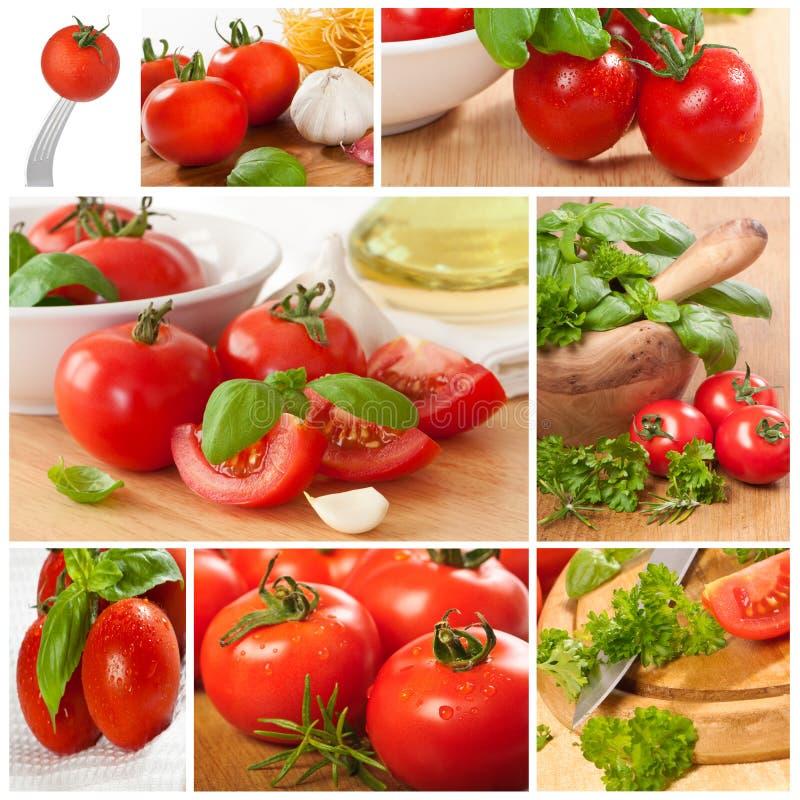 ντομάτα κολάζ στοκ εικόνες