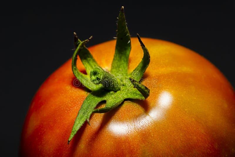 Ντομάτα σε σκούρο φόντο στοκ φωτογραφίες με δικαίωμα ελεύθερης χρήσης
