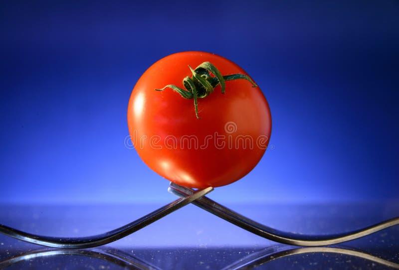 ντομάτα δύο δικράνων στοκ εικόνες με δικαίωμα ελεύθερης χρήσης