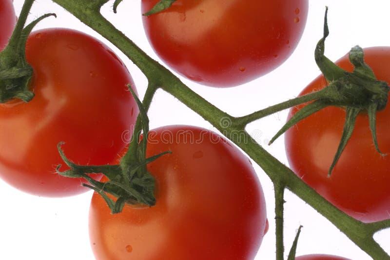Download ντομάτα στοκ εικόνες. εικόνα από αναπτυγμένος, στούντιο - 390124