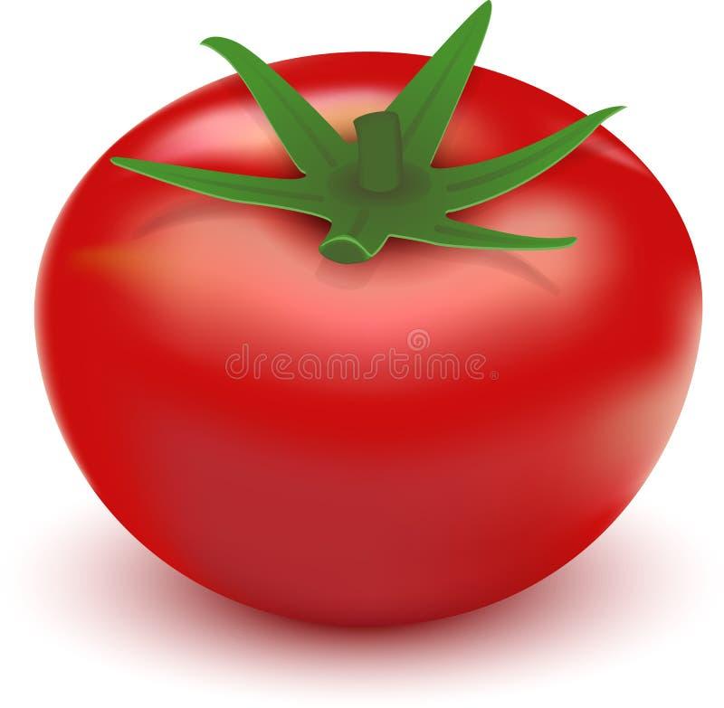 Ντομάτα ελεύθερη απεικόνιση δικαιώματος