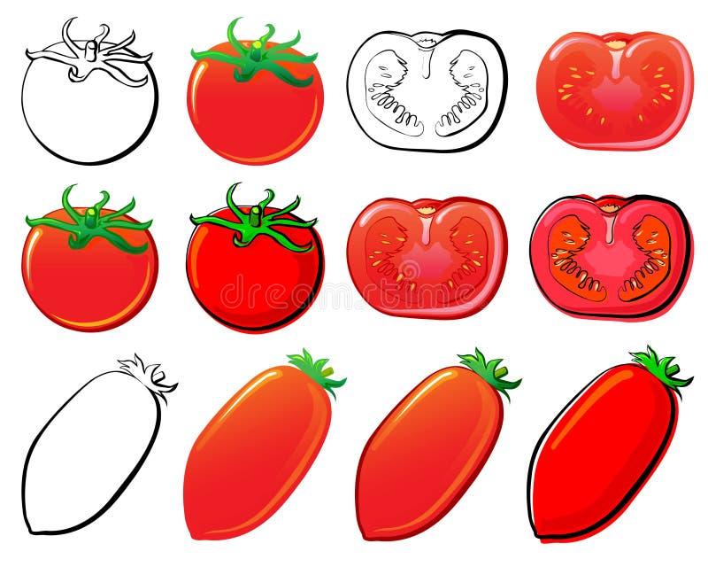 ντομάτα απεικόνιση αποθεμάτων