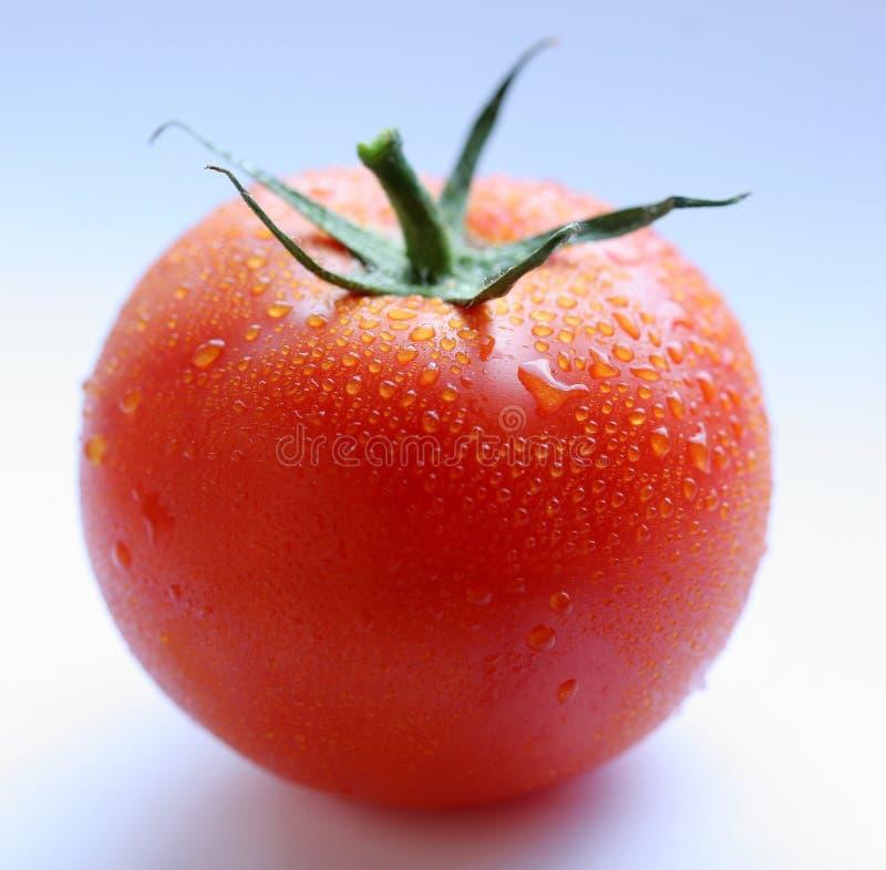 ντομάτα στοκ εικόνες