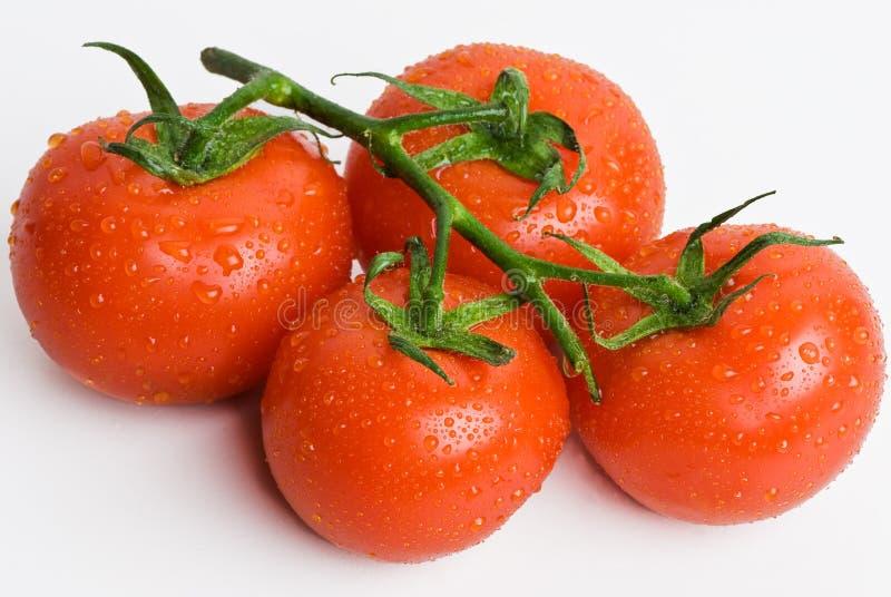 Ντομάτες αμπέλων στοκ φωτογραφίες