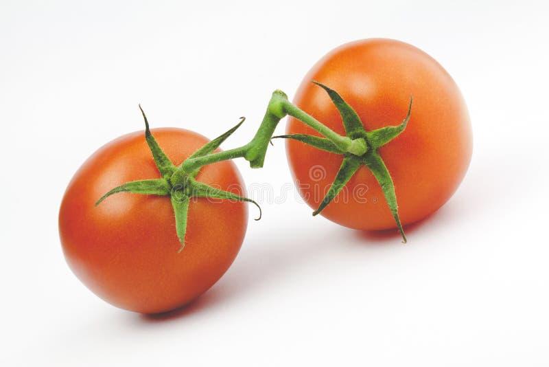 ντομάτες δύο στοκ εικόνα