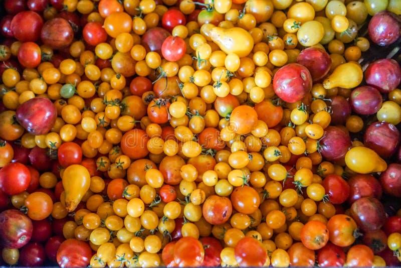 Ντομάτες κερασιών που επιλέγονται πρόσφατα στοκ φωτογραφία