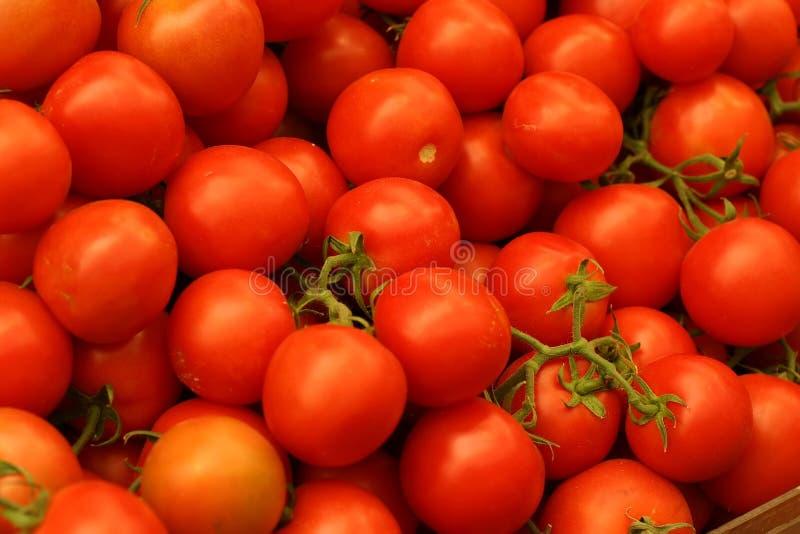 ντομάτες κλάδων στοκ φωτογραφία