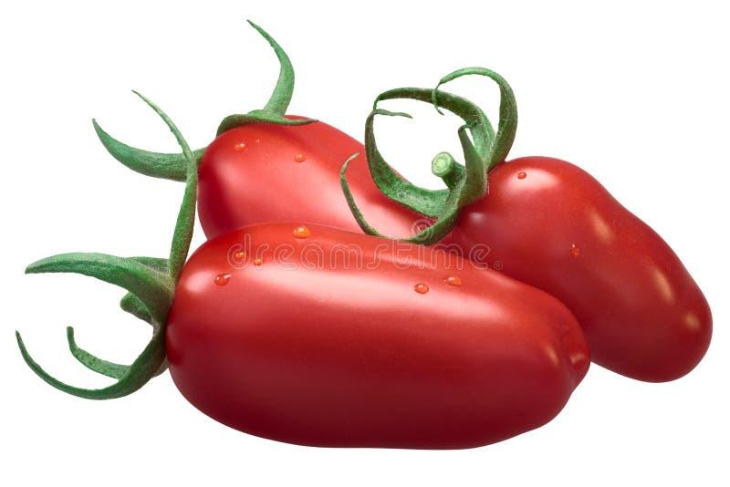 Ντομάτες κολλών SAN Marzano, πορείες στοκ φωτογραφίες με δικαίωμα ελεύθερης χρήσης