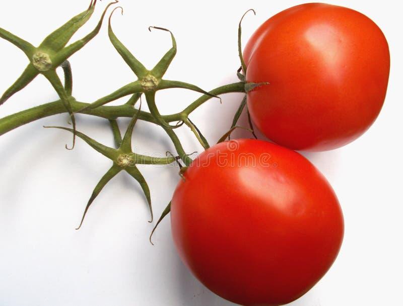 Ντομάτες με τους κλάδους στοκ φωτογραφίες
