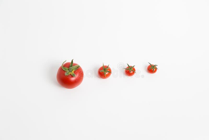 Ντομάτες σε μια σειρά στοκ εικόνα