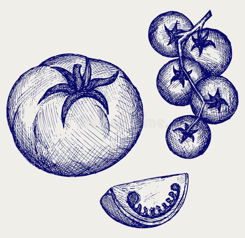 Ντομάτες στην άμπελο απεικόνιση αποθεμάτων