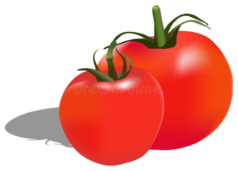 Ντομάτες απεικόνιση αποθεμάτων