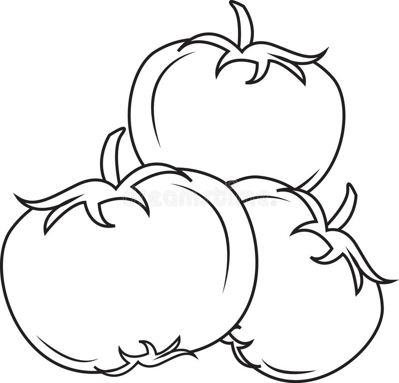 Ντομάτες διανυσματική απεικόνιση