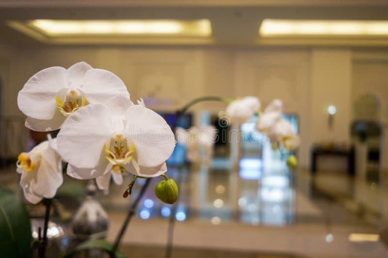 Ντουμπάι Καλοκαίρι 2016 Φωτεινό και σύγχρονο εσωτερικό το ξενοδοχείο Ritz Carlton Ντουμπάι στοκ φωτογραφίες