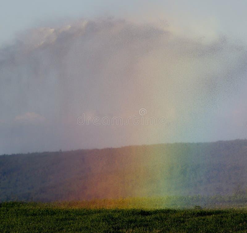 Ντους ψεκαστήρων ουράνιων τόξων στοκ εικόνα
