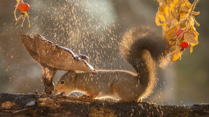 Download ντους στοκ εικόνες. εικόνα από φύση, βροχή, αστείος, ευτυχής - 62717030