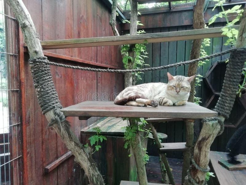 Νυσταγμένη νυσταλέα γάτα λουλουδιών Snoozing στοκ φωτογραφία με δικαίωμα ελεύθερης χρήσης