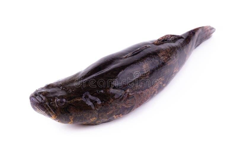 ψάρια 4 δωρεάν dating Πώς μπορώ να συνδέσω τις οθόνες Krk