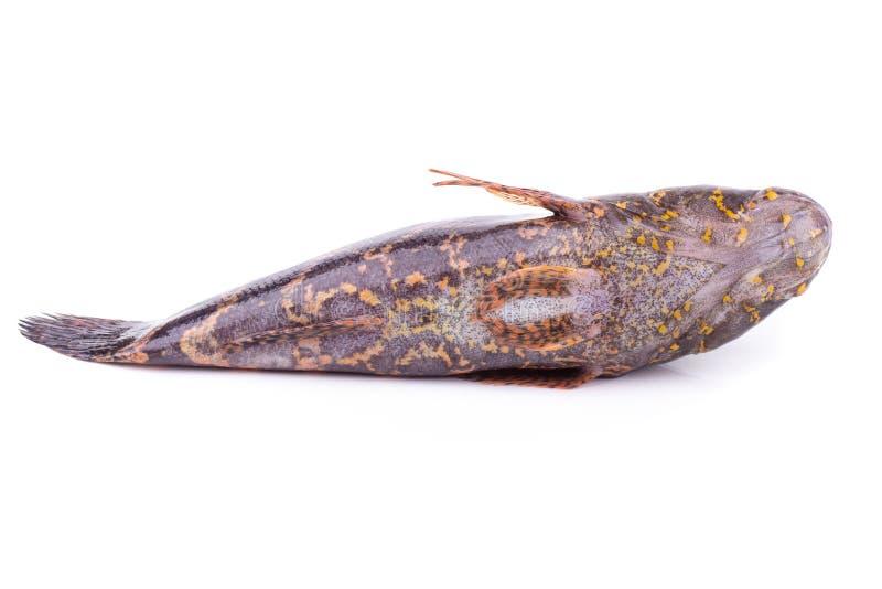 ψάρια 4 δωρεάν dating