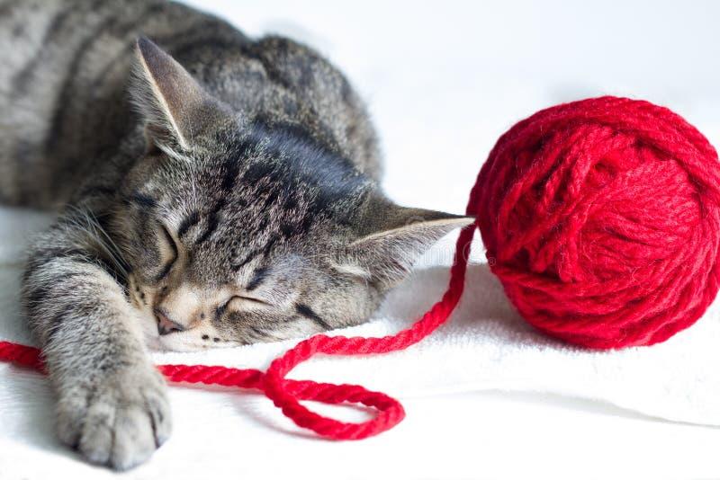Νυσταλέα γκρίζα γάτα και κόκκινη σφαίρα του μαλλιού στο άσπρο υπόβαθρο στοκ φωτογραφίες