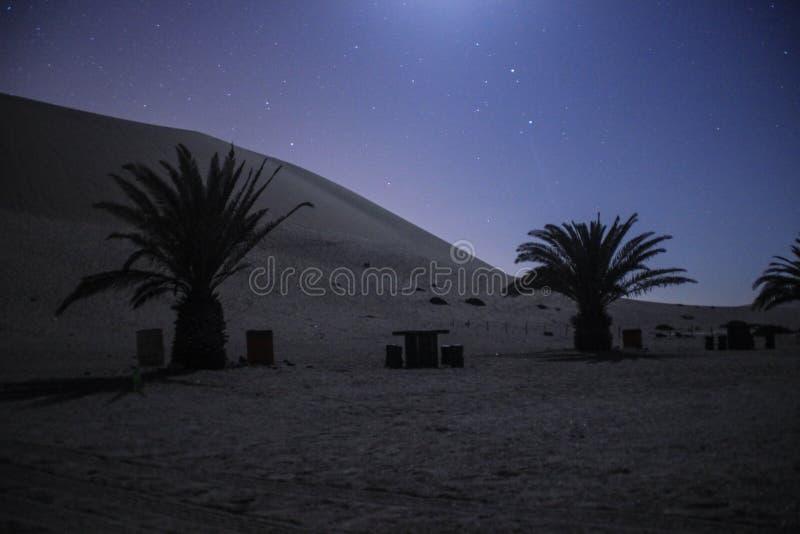 Νυχτερινός ουρανός με τα αστέρια, τους φοίνικες και τους αμμόλοφους στο Namib στοκ εικόνες