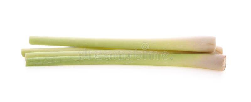 Νωπά στελέχη λεμονόχορτου απομονωμένα σε λευκό φόντο στοκ εικόνες