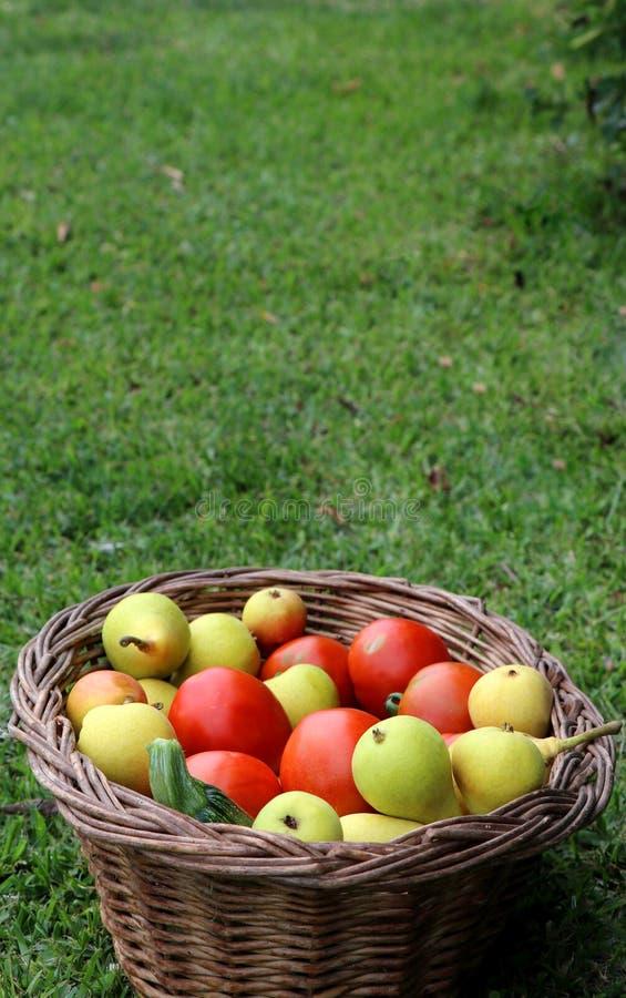 Νωποί καρποί στο καλάθι στην πράσινη χλόη Ντομάτες, αχλάδια και zucchinis στοκ φωτογραφίες με δικαίωμα ελεύθερης χρήσης