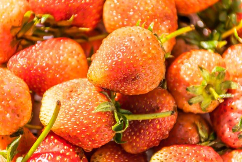 Νωποί καρποί φραουλών, ζουμ macroshot στοκ φωτογραφία με δικαίωμα ελεύθερης χρήσης