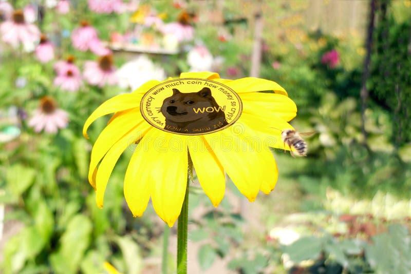 Νόμισμα dogecoin μέσα στο λουλούδι στοκ εικόνα με δικαίωμα ελεύθερης χρήσης
