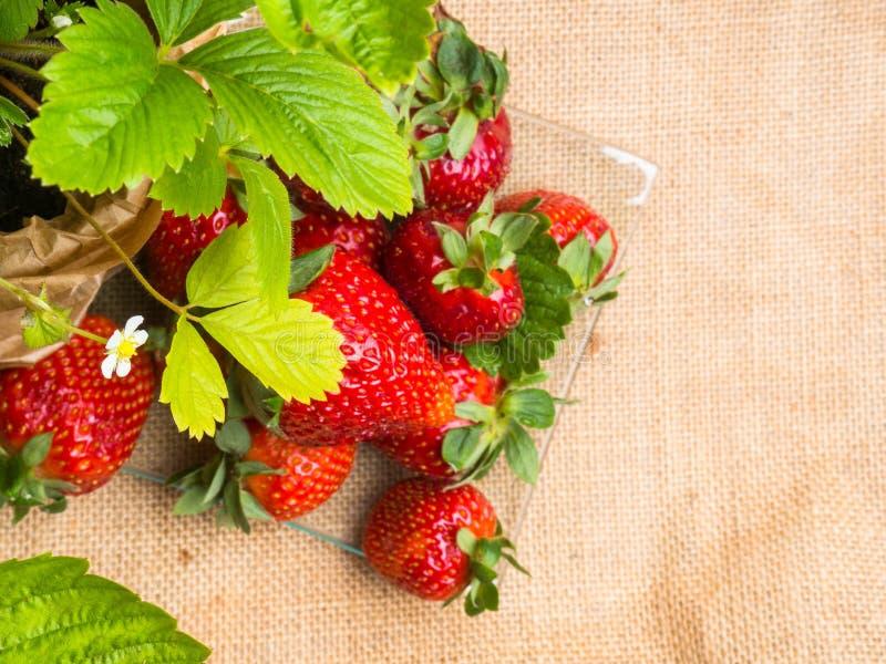 νόστιμες ώριμες φράουλες στις στάσεις γυαλιού στον αγροτικό πίνακα με sackcloth στοκ φωτογραφία με δικαίωμα ελεύθερης χρήσης