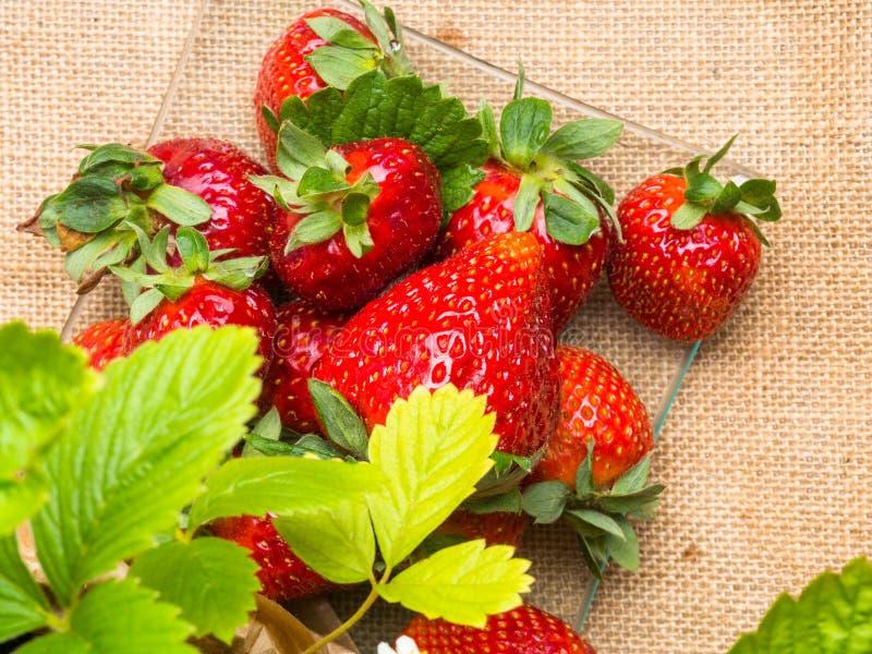 νόστιμες ώριμες φράουλες στις στάσεις γυαλιού στον αγροτικό πίνακα με sackcloth στοκ εικόνα με δικαίωμα ελεύθερης χρήσης
