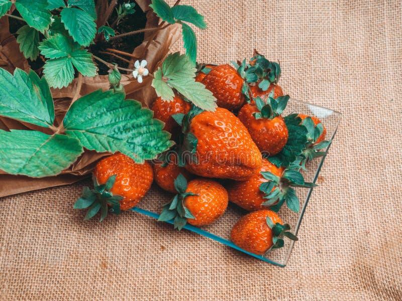 νόστιμες ώριμες φράουλες στις στάσεις γυαλιού στον αγροτικό πίνακα με sackcloth στοκ εικόνες