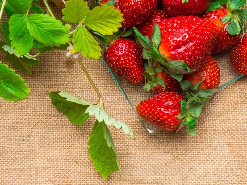 νόστιμες ώριμες φράουλες στις στάσεις γυαλιού στον αγροτικό πίνακα με sackcloth στοκ εικόνα