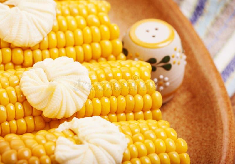 Νόστιμος που βράζεται corncob στοκ εικόνα