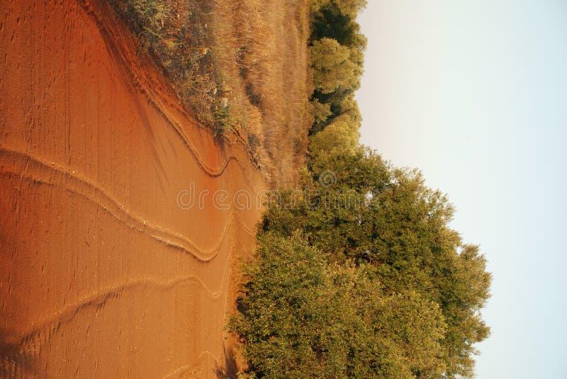 νότια δέντρα ελιών της Ιταλί& στοκ φωτογραφίες με δικαίωμα ελεύθερης χρήσης
