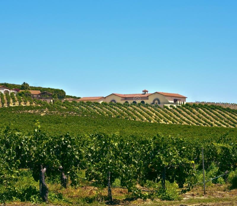 νότιο κρασί χωρών Καλιφόρνι&alp στοκ φωτογραφίες με δικαίωμα ελεύθερης χρήσης
