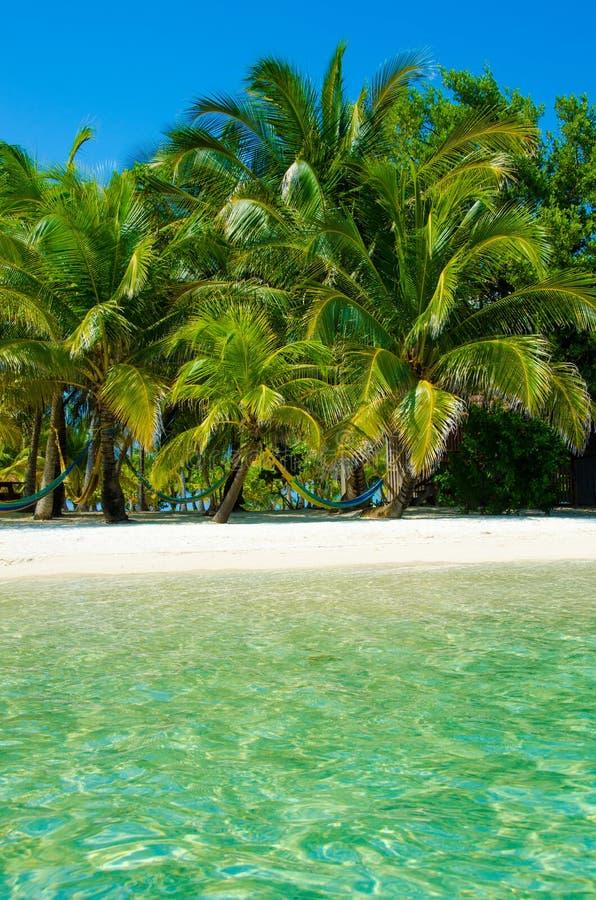 Νότιο νερό Caye στη Μπελίζ - μικρό καραϊβικό νησί παραδείσου με την τροπική παραλία για τις διακοπές και τη χαλάρωση στοκ φωτογραφίες