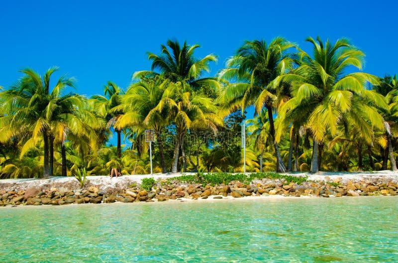 Νότιο νερό Caye στη Μπελίζ - μικρό καραϊβικό νησί παραδείσου με την τροπική παραλία για τις διακοπές και τη χαλάρωση στοκ εικόνες