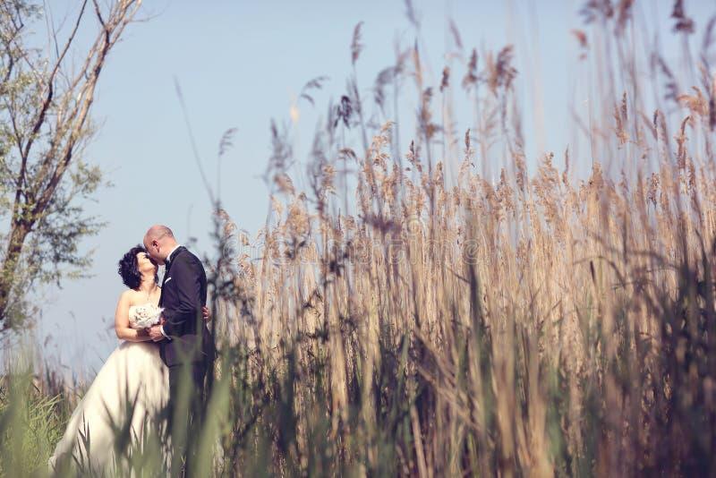 Νύφη και νεόνυμφος που περιβάλλονται από τη βιασύνη στοκ φωτογραφίες με δικαίωμα ελεύθερης χρήσης