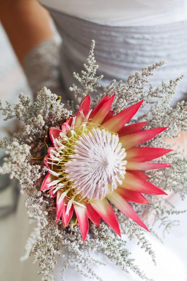 Νύφη που κρατά την όμορφη ανθοδέσμη λουλουδιών protea της στοκ εικόνα
