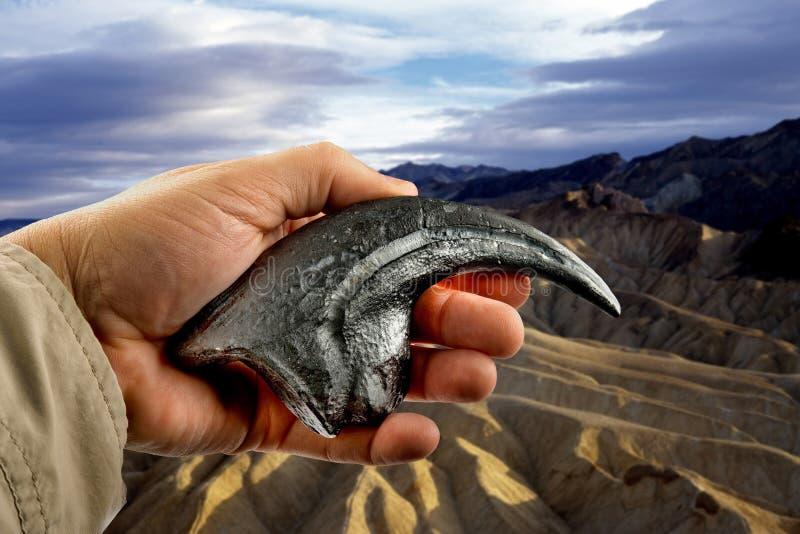 Νύχι Velociraptor στοκ φωτογραφία με δικαίωμα ελεύθερης χρήσης
