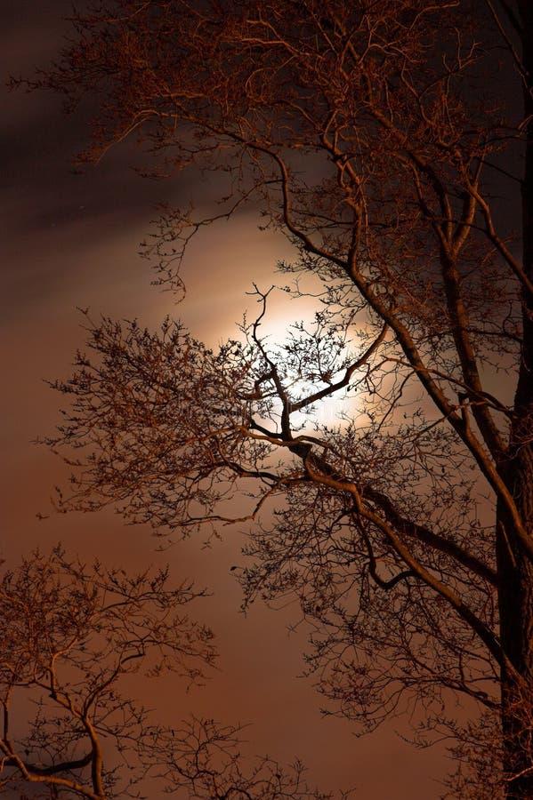 νύχτα απόκοσμη στοκ φωτογραφίες