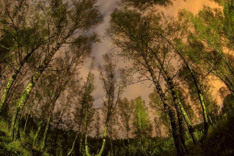 Νύχτα σεληνόφωτου σε ένα άλσος σημύδων Ρωσία στοκ εικόνα