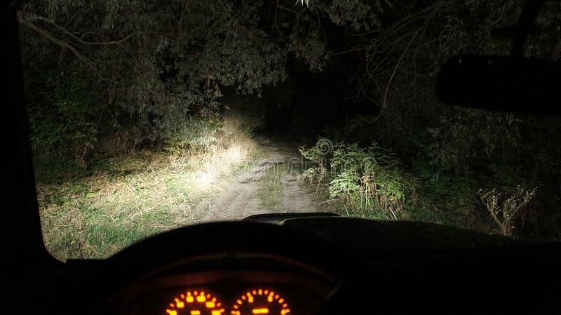 Νύχτα στο δάσος στοκ φωτογραφίες με δικαίωμα ελεύθερης χρήσης