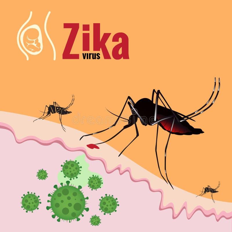 Ξέσπασμα ιών Zika και απορροφώντας αίμα κουνουπιών στο δέρμα απεικόνιση αποθεμάτων