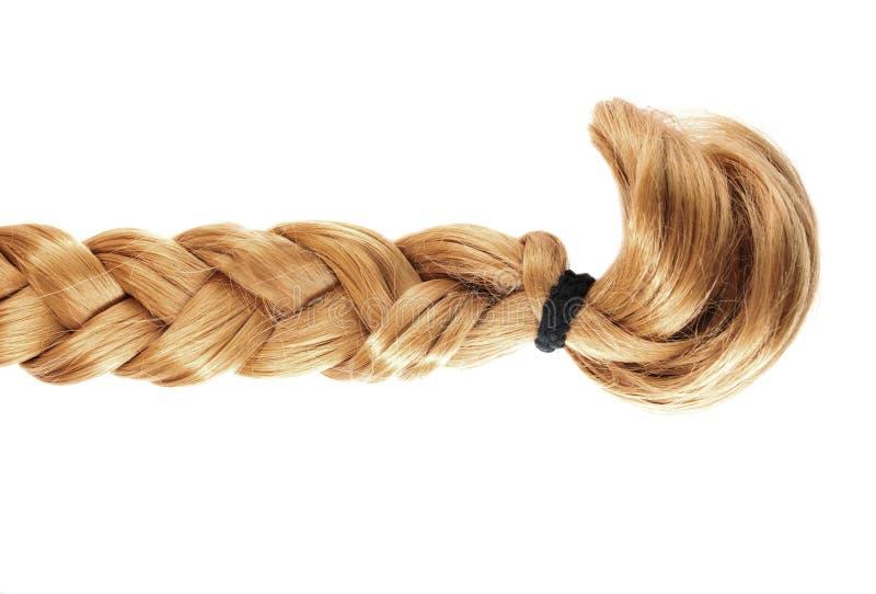 Ξανθή κοτσίδα ή πλεξούδα των ξανθών μαλλιών στο άσπρο υπόβαθρο στοκ εικόνα με δικαίωμα ελεύθερης χρήσης