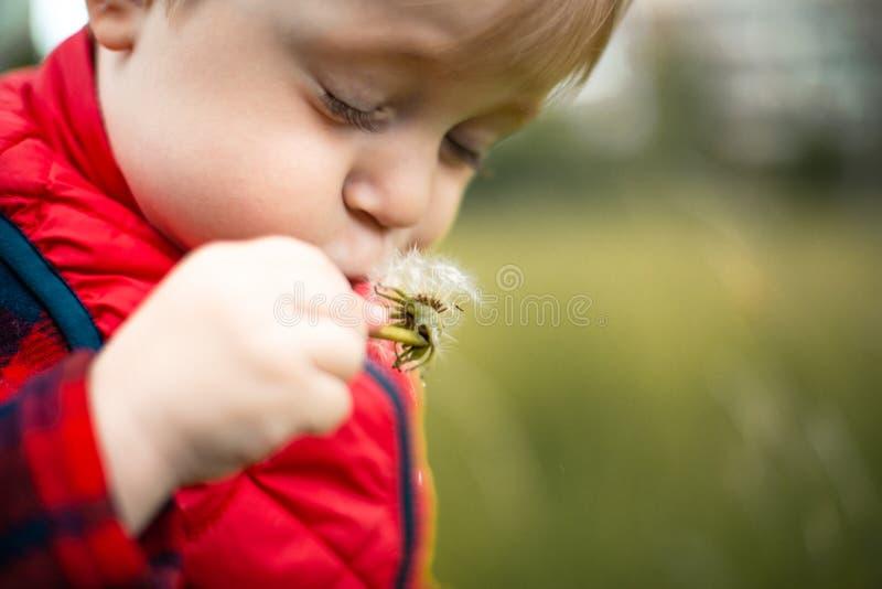 Ξανθό παιδί στο λιβάδι που εύχεται για τους σπόρους του Dandelion στοκ εικόνα με δικαίωμα ελεύθερης χρήσης
