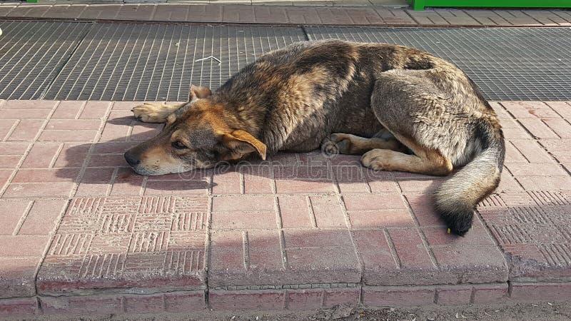 Ξαπλώνοντας περιπλανώμενο σκυλί στοκ φωτογραφία